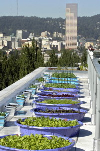 Rooftop garden at new Rocket building